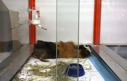 Своевременная и качественная помощь квалифицированный ветеринар хомяку и другим животным окажет необходимую помощь.